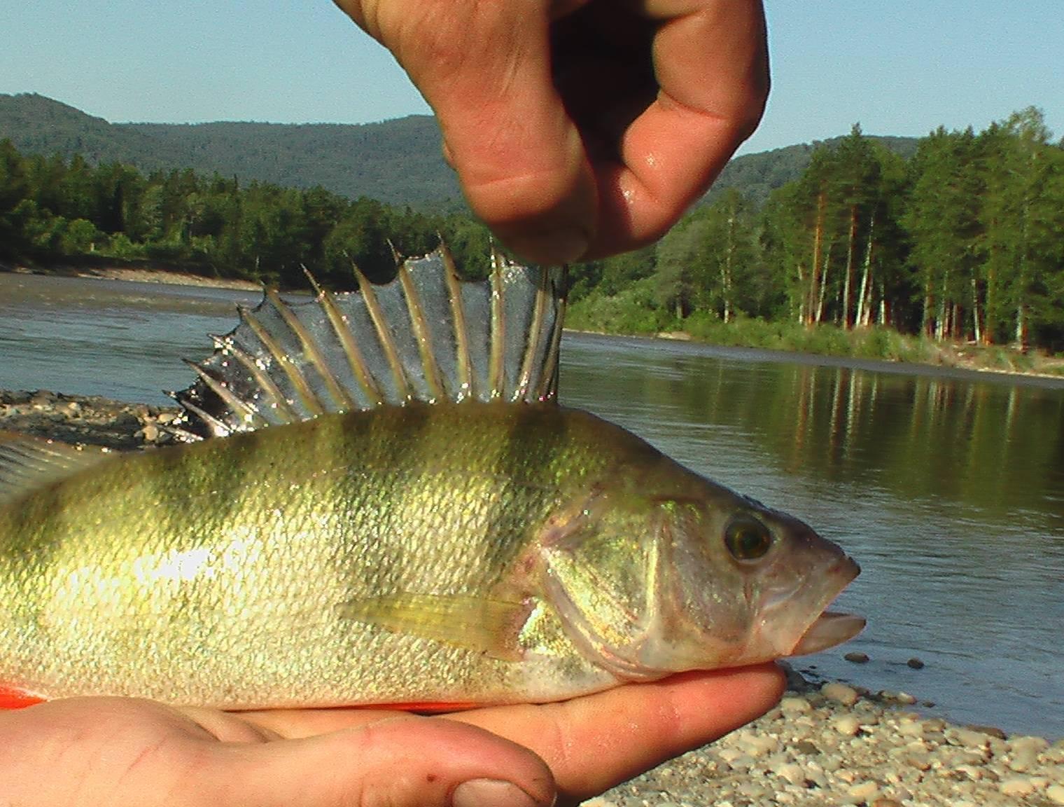 Рыбалка на телецком озере на сига