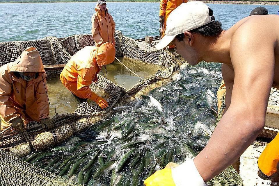 Можно ли продавать рыбу, выловленную самостоятельно? – рыбалке.нет