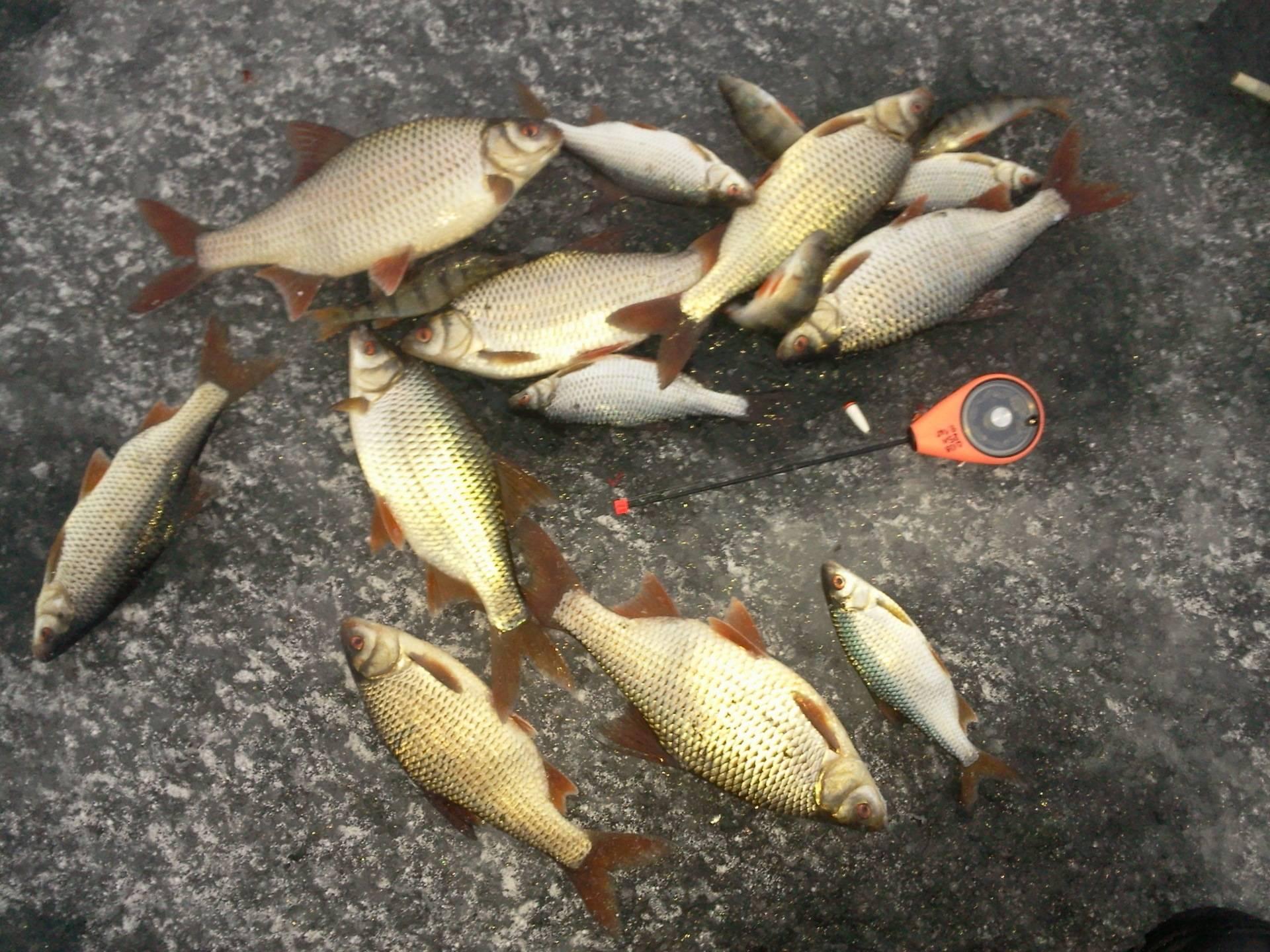 Места рыбалки — минское шоссе