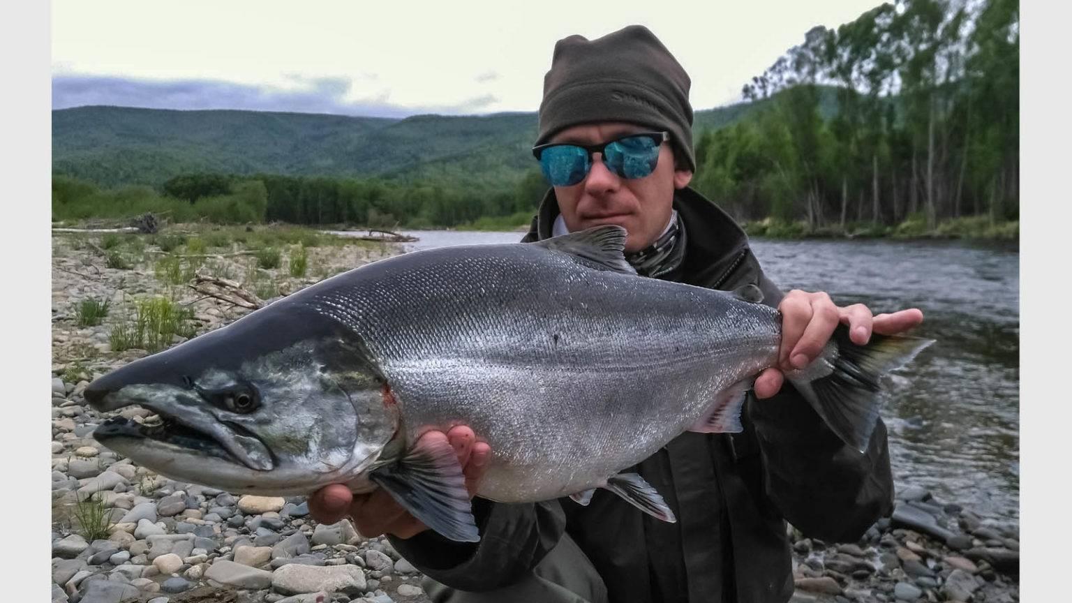 Сима (рыба): описание, вкусовые качества, калорийность, рецепты приготовления