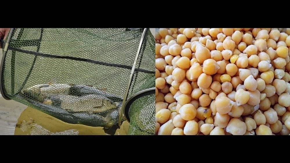 Как запарить горох для рыбалки: рецепты приготовления, сколько варить, способы быстро замочить