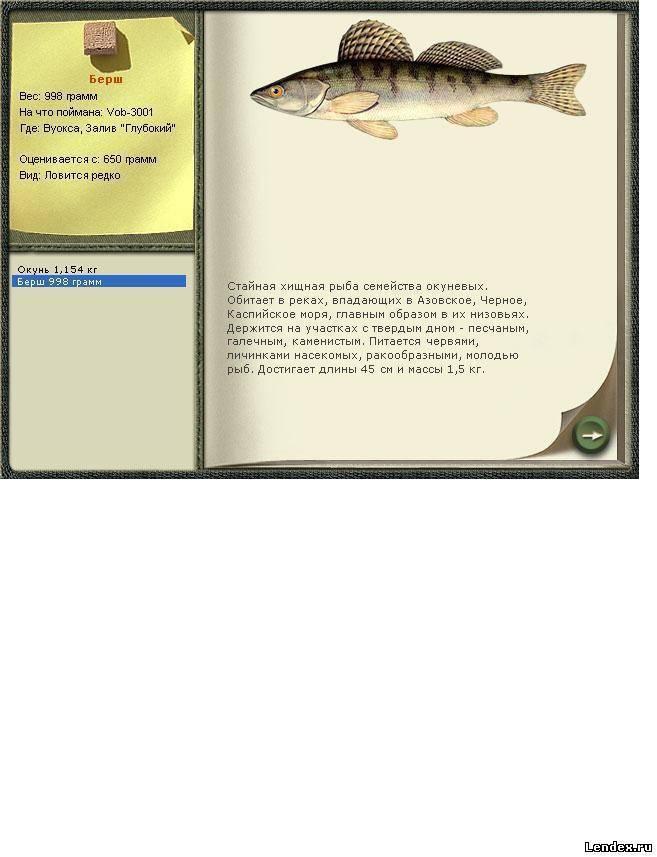 Пескарь обыкновенный: фото, приготовление, польза и вред