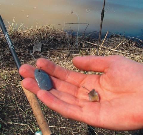 На что ловить голавля – лучшие наживки и приманки