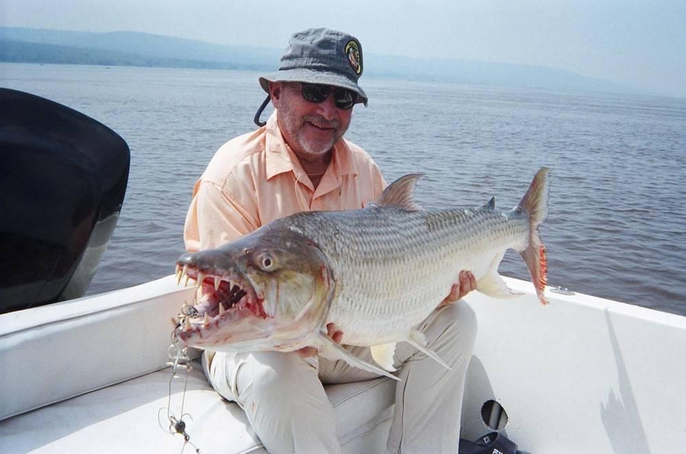 Рыба голиаф: среда обитания, особенности поведения, нерест