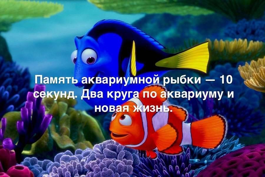 Какая память у рыбки, правда, что память рыбки 3 секунды.