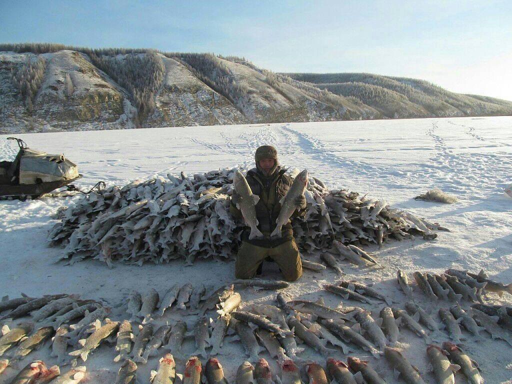 Рыболовные туры и платная рыбалка в якутии (республика саха)