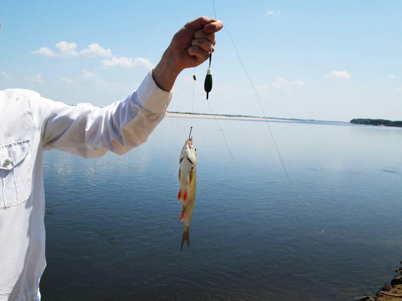 Ловля голавля на спиннинг осенью, летом, весной на реках: оснастка спиннинга, приманки, поиск голавля, проводка