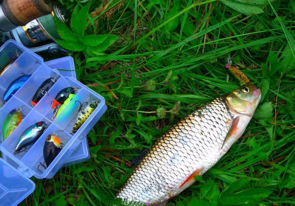 Ловля голавля на кузнечика - читайте на сatcher.fish