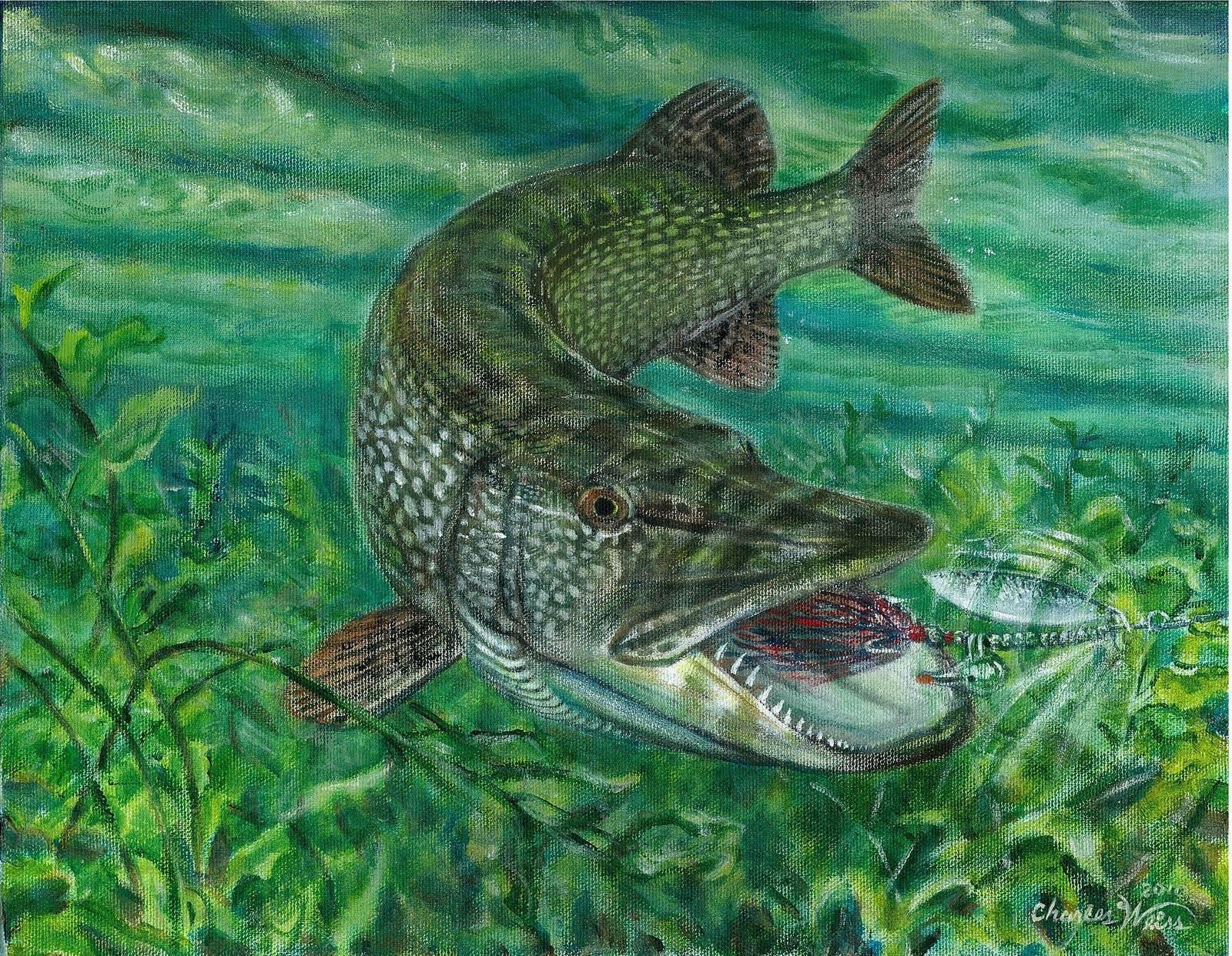 Образ жизни рыб