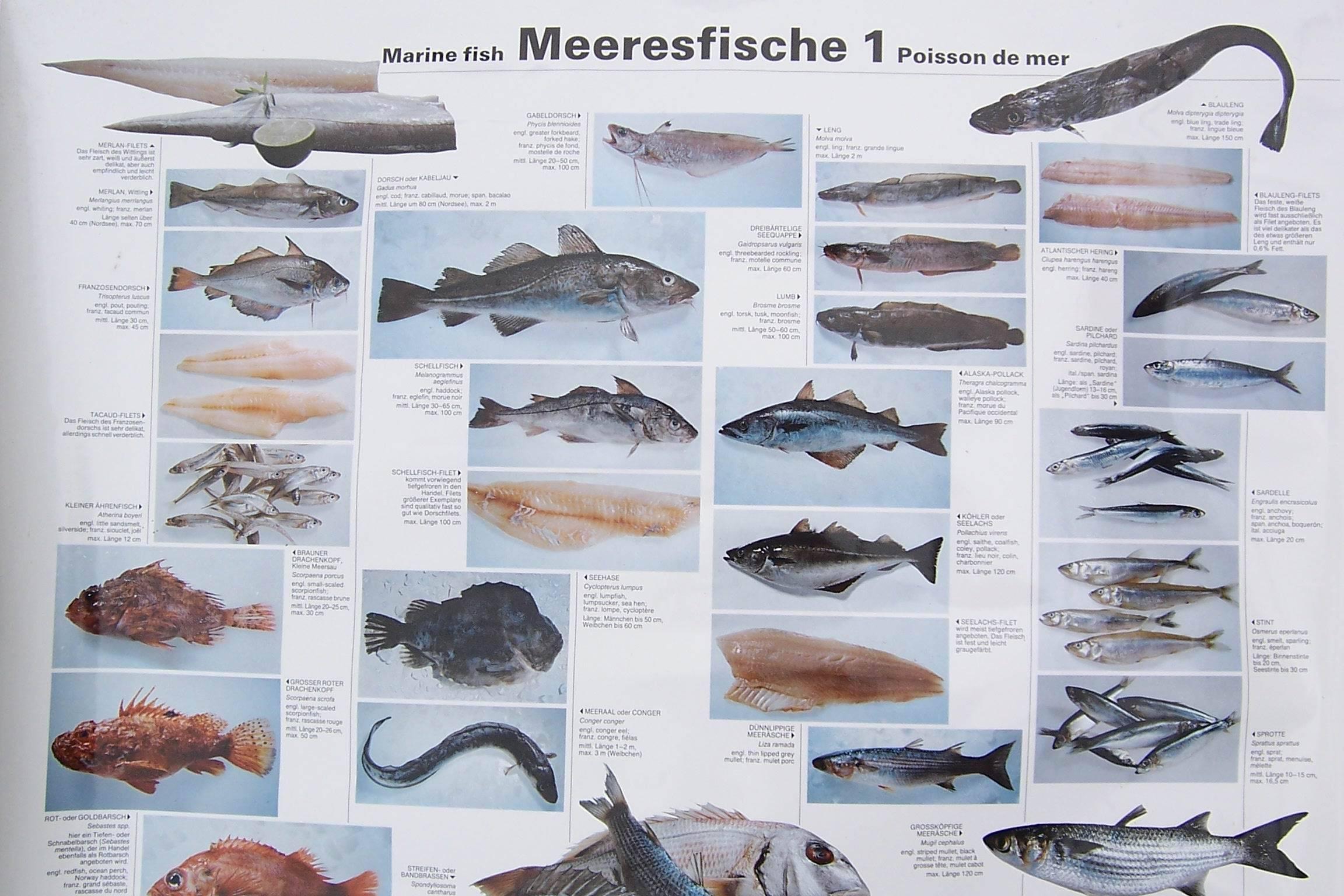 Ильная рыба или амия - рыба несъедобная