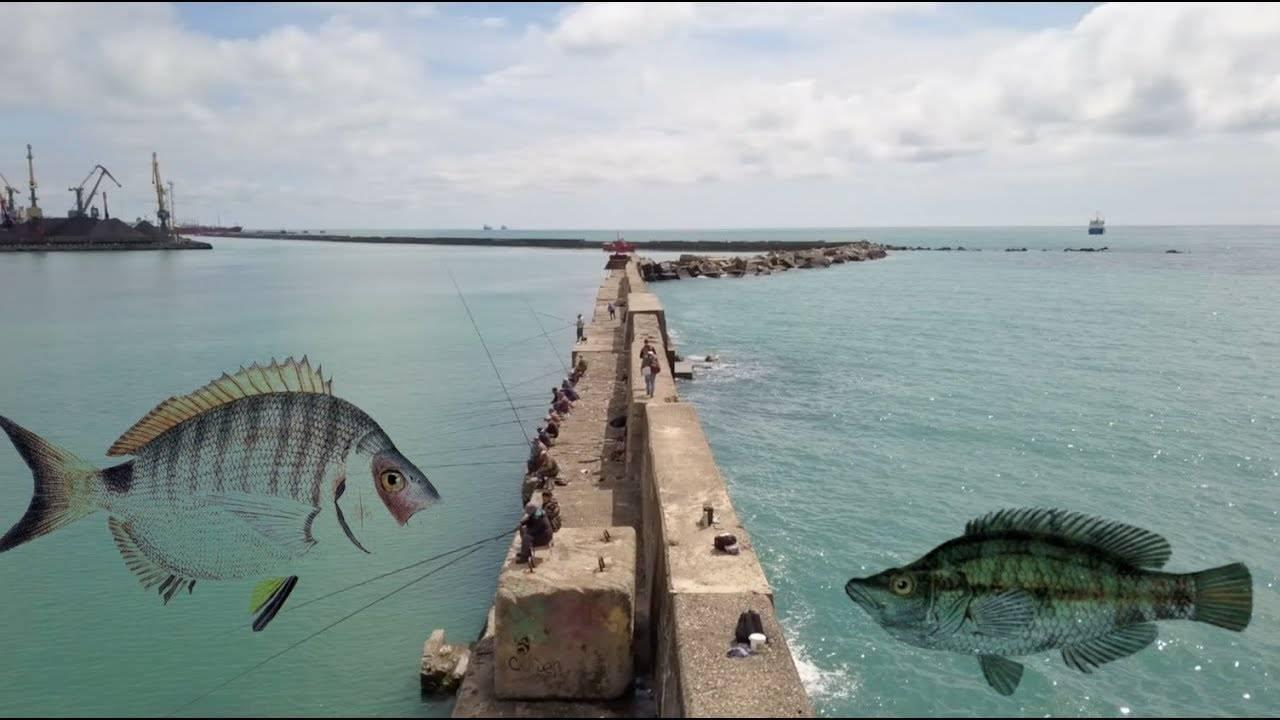 Рыбалка в геленджике - в море или с берега, стоимость, отзывы туристов