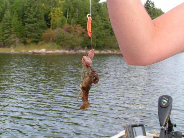 Как ловить раков, когда можно ловить раков: ловля раков на раколовку