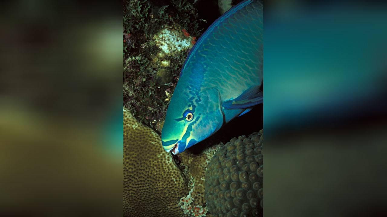 Рыба-сабля: фото, приготовление, польза и вред