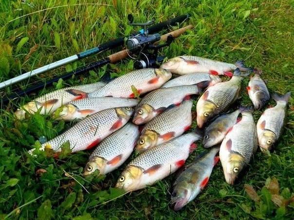 Рыбалка в смоленске и смоленской области