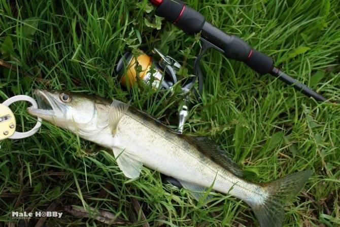 Рыбалка на реке кубань: уловистые места и отзывы рыбаков