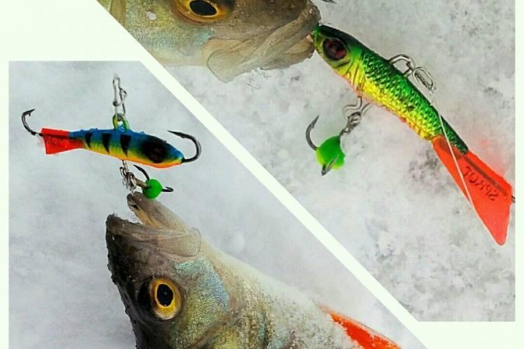 Техника ловли окуня зимой на балансир и уловистые цвета приманки техника ловли окуня зимой на балансир и уловистые цвета приманки