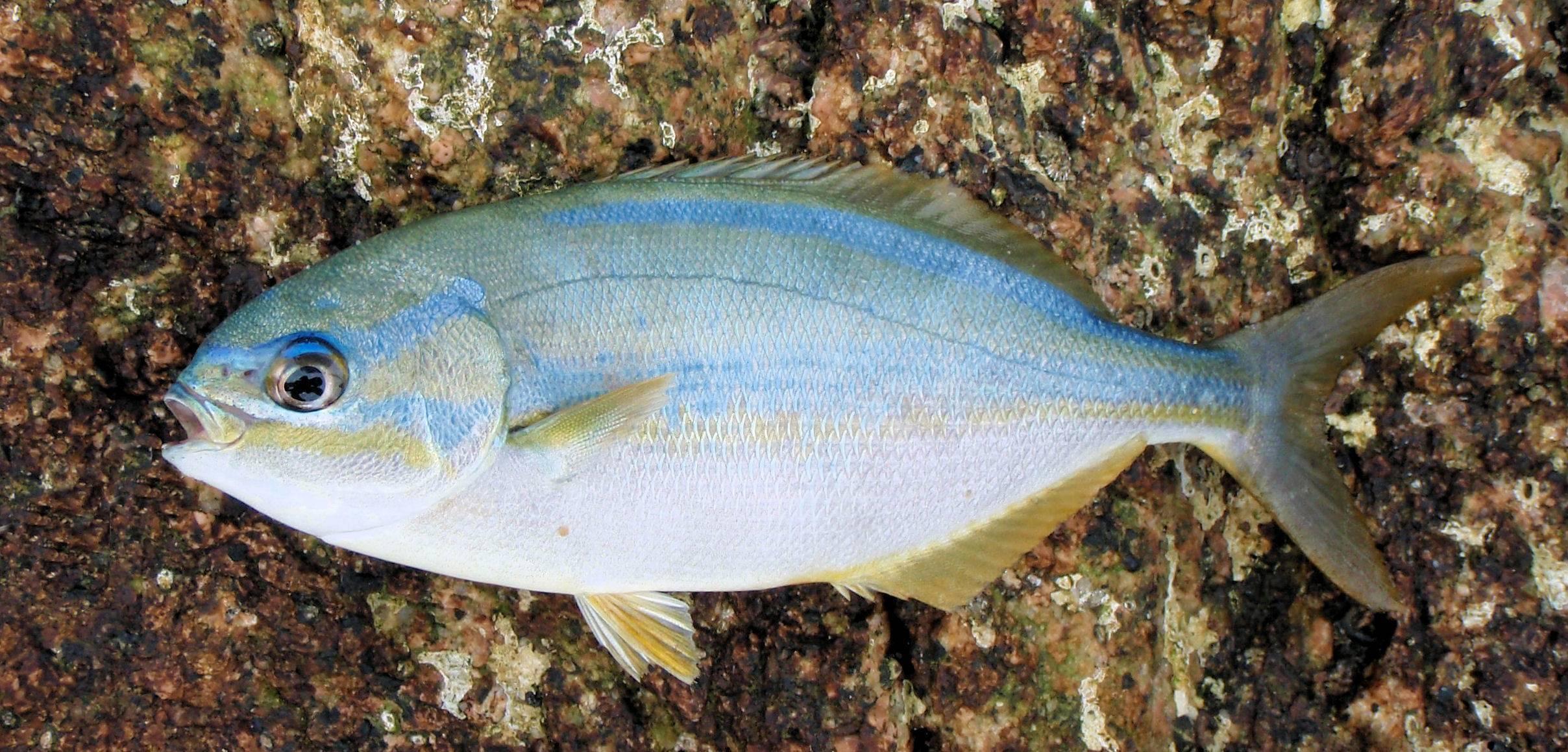 Рыбы черного моря. названия, описания и особенности рыб черного моря