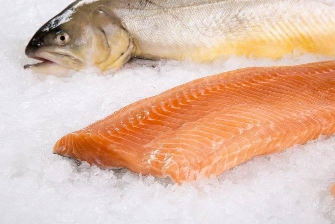 Рыба тилапия - польза и вред, полезные свойства и противопоказания