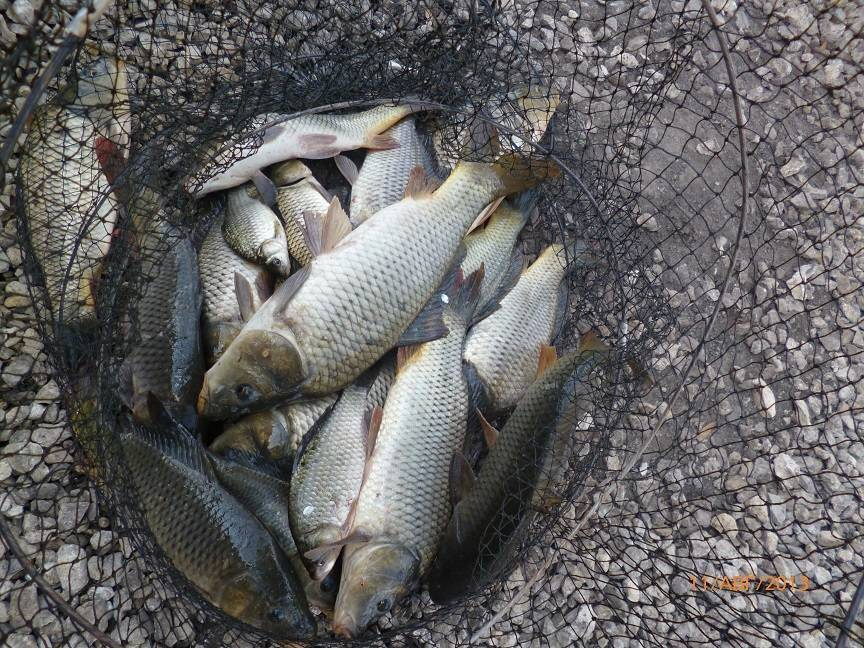 Рыбалка в липецкой области: на дону, платная и бесплатная