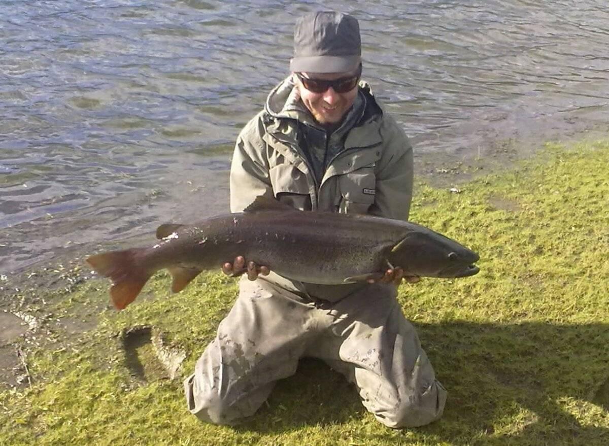 Рыба таймень: состав и польза. как готовят таймень - вмоменте