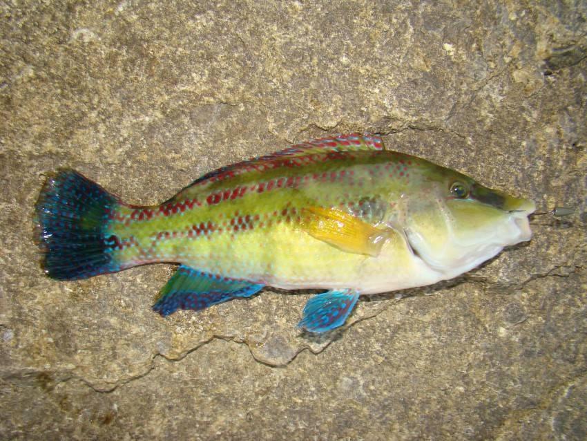 """""""дорогая черноморская рыба — это миф"""". интервью с совладельцем ресторана """"рыба моя"""""""