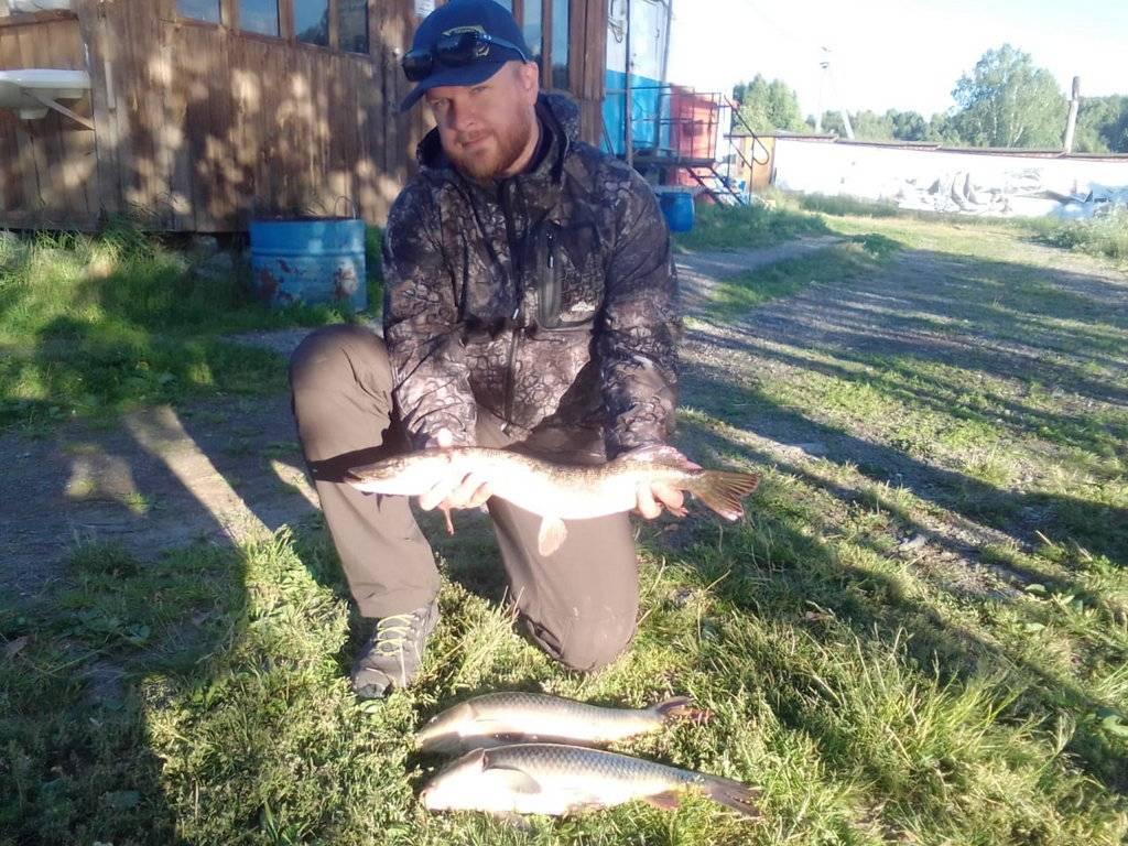 Рыбы свердловской области