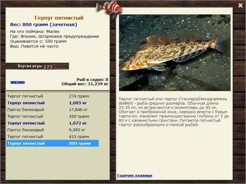 Рыба терпуг и ее особенности – рыбалке.нет