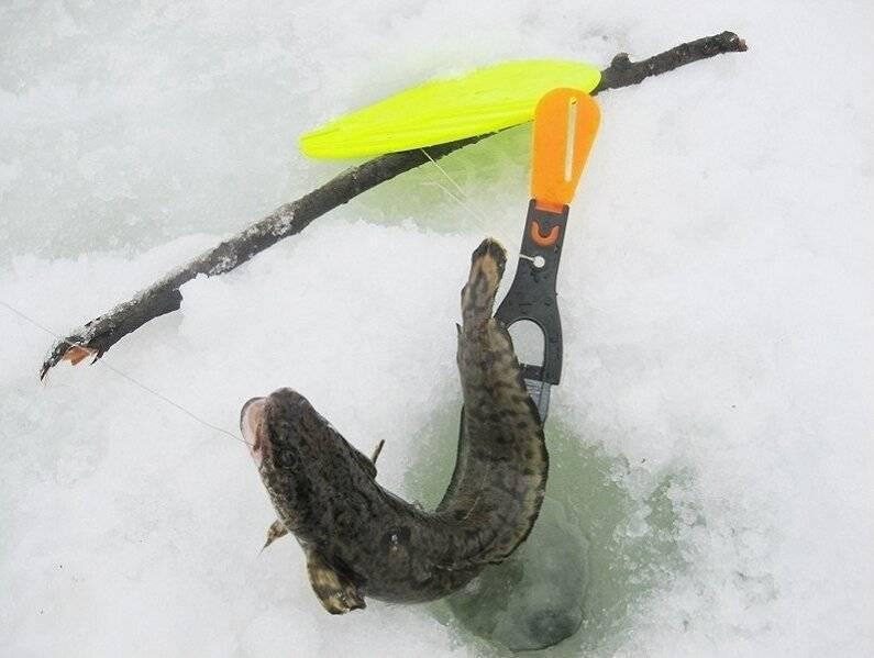 Ловля налима на стукалку зимой