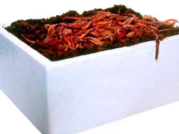 Чем кормить червей для рыбалки в домашних условиях?