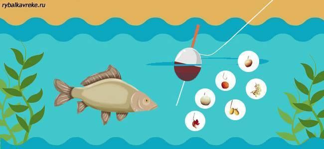 Карп: полезные свойства и химический состав | food and health