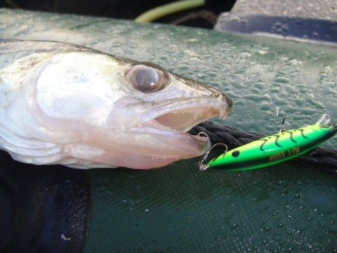 Рыбалка наспиннинг осенью