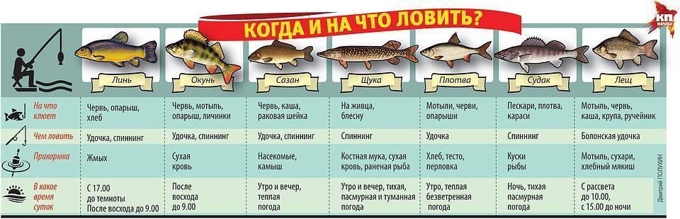 7 простых советов: «как заставить рыбу клевать»