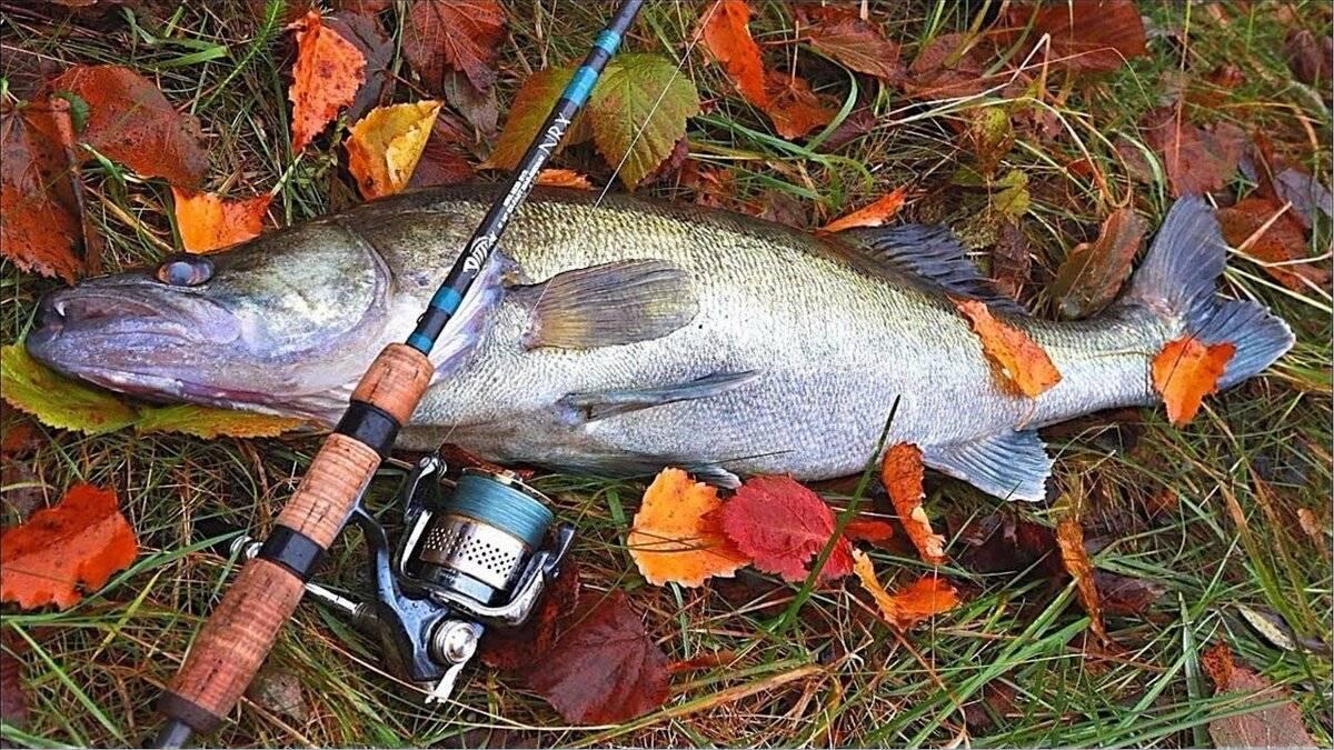 Места для рыбалки в республике башкортостан – платная и бесплатная рыбалка!