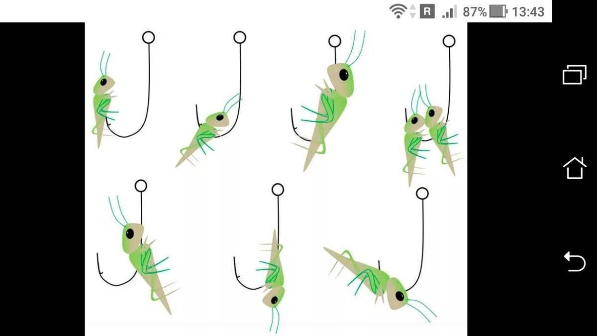Как поймать голавля весной | большое руководство