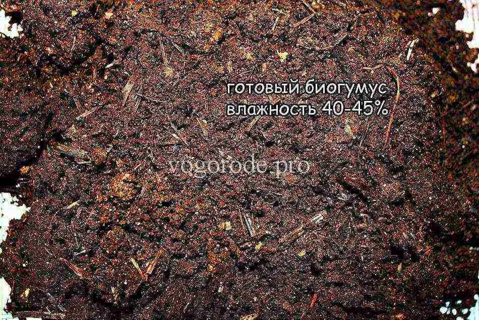 Как разводятся дождевые и другие породы червей в домашних условиях.