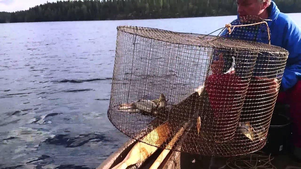 Верши для ловли рыбы своими руками