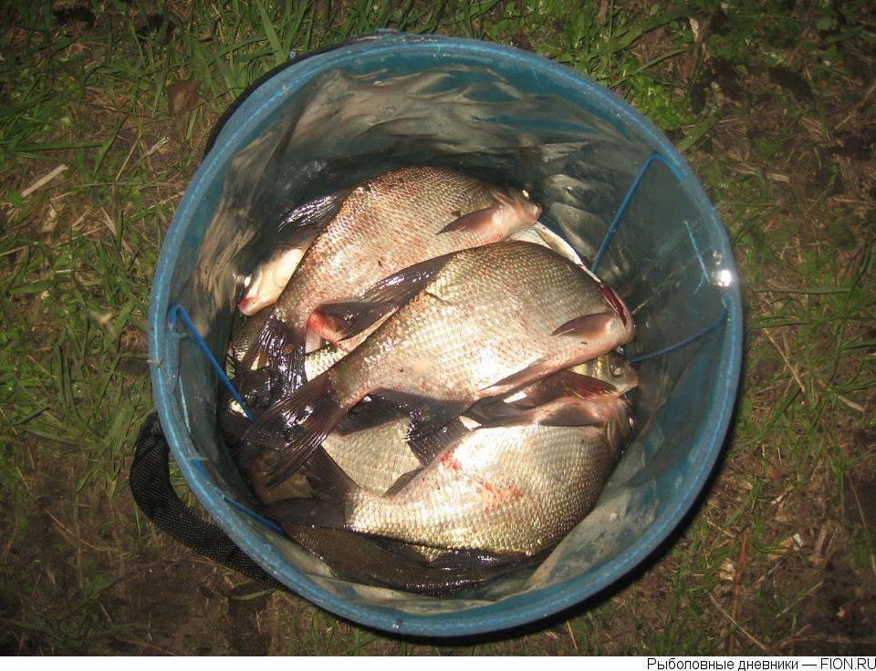 Рыбалка в шатуре: отзывы. шатурские озера: святое, муромское, белое и чёрное