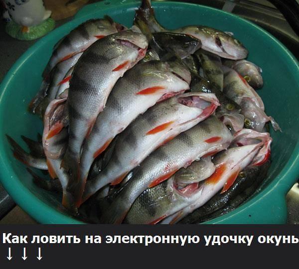 Морская рыбалка: особенности, снасти и как ловить рыбу