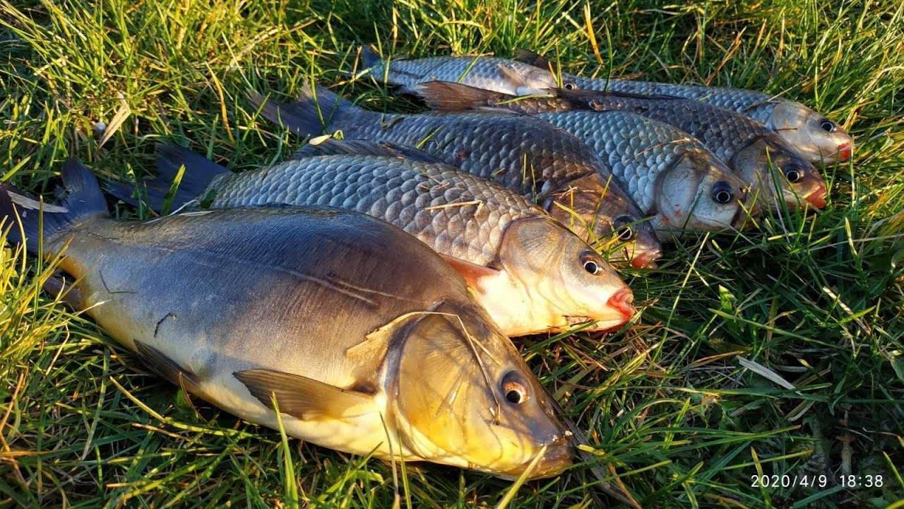 Ловля карася на поплавочную удочку - снасти и тактика