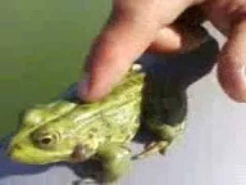 Ловля щуки на лягушку незацепляйку – рабочие приманки, тактика, правильная проводка