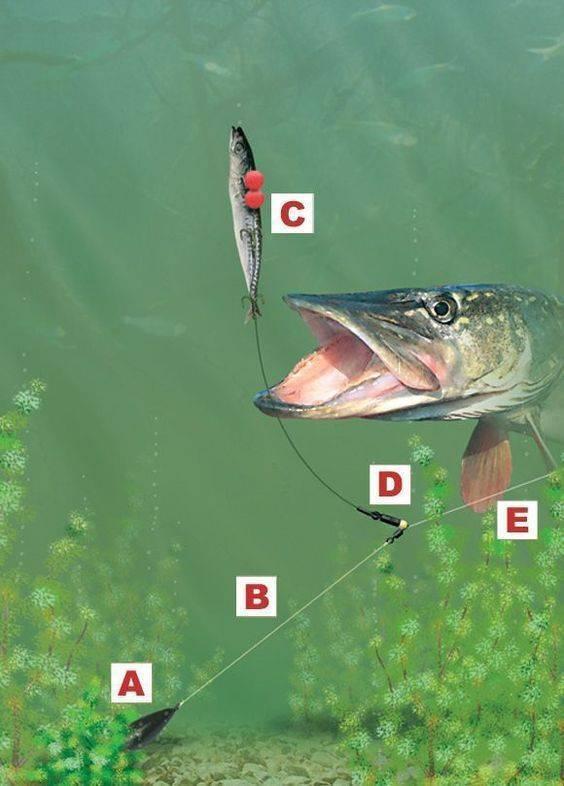 Ловля окуня на живца осенью - читайте на сatcher.fish