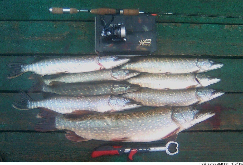 Платная рыбалка в сергиевом посаде