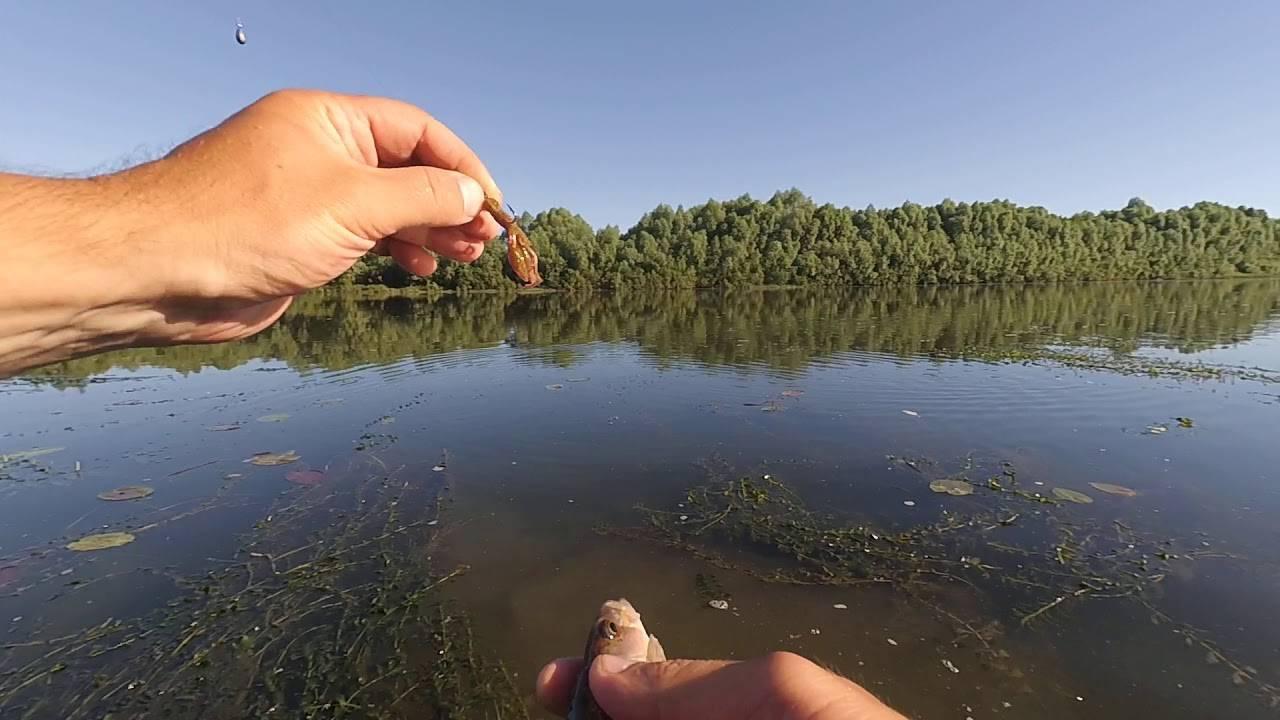Рыбалка в рязанской области - читайте на сatcher.fish