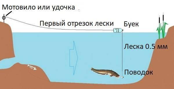 ✅ ловля сома на днепре в могилеве - danafish.ru