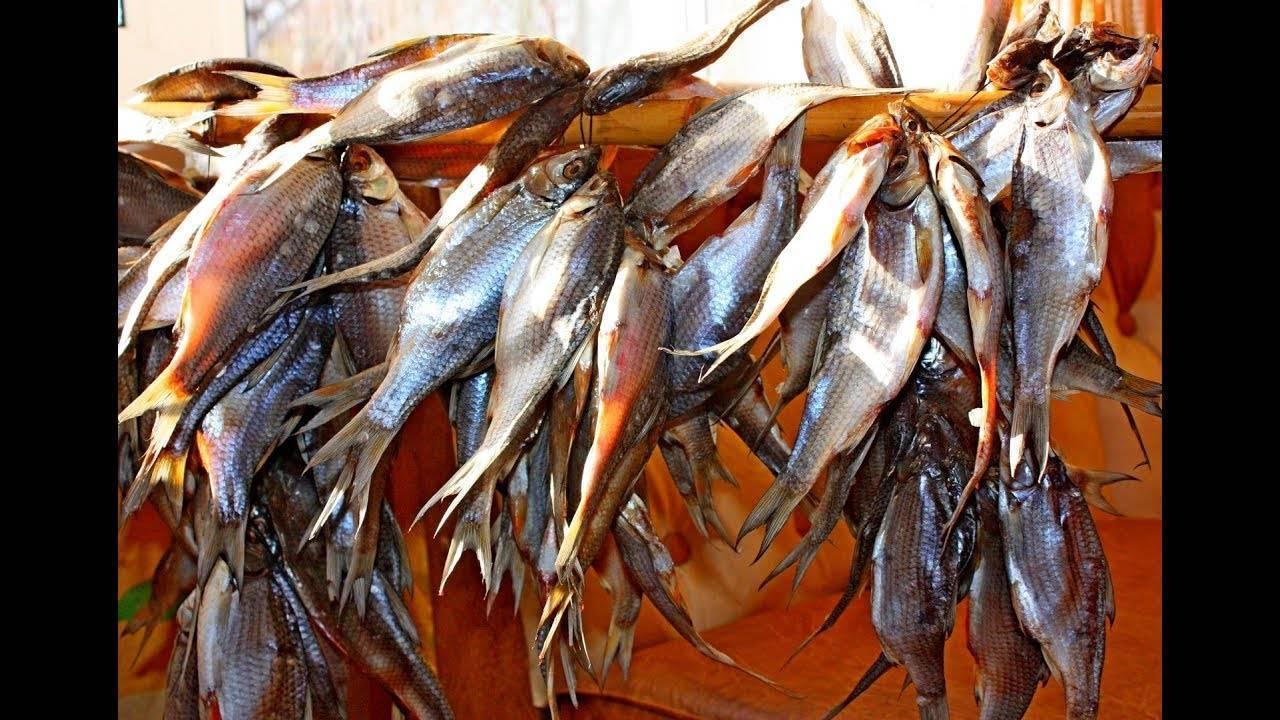 Вяленая рыба в электросушилке