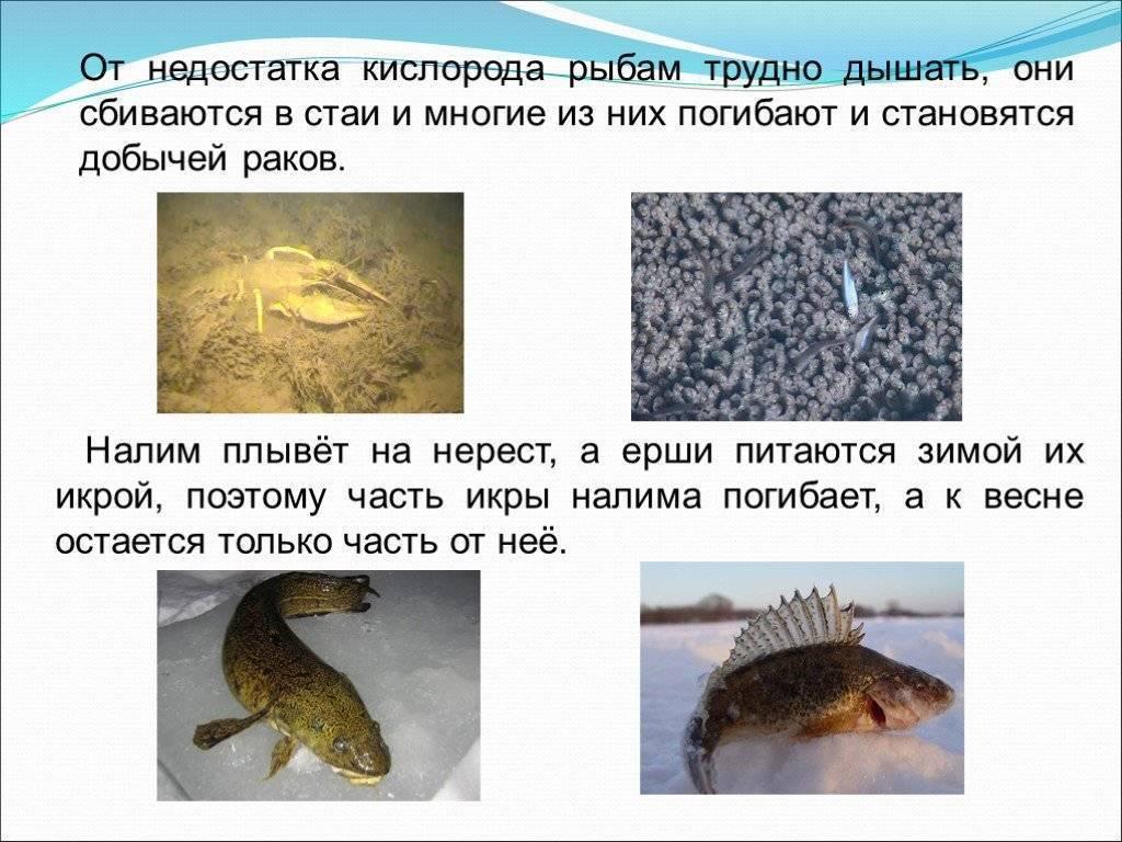 В какую погоду лучше клюёт рыба зимой