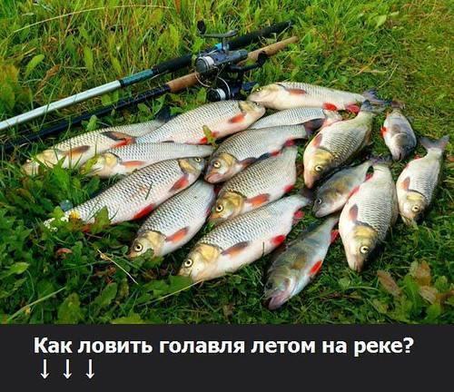 В какую погоду лучше ловить рыбу