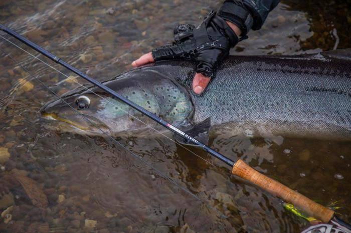Рыбалка на сахалине: какая рыба водится и особенности ловли
