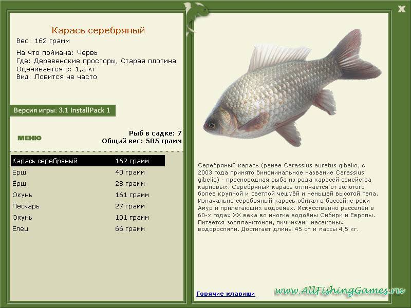 Рыба карп: называется водяной свиньёй за полезные качества