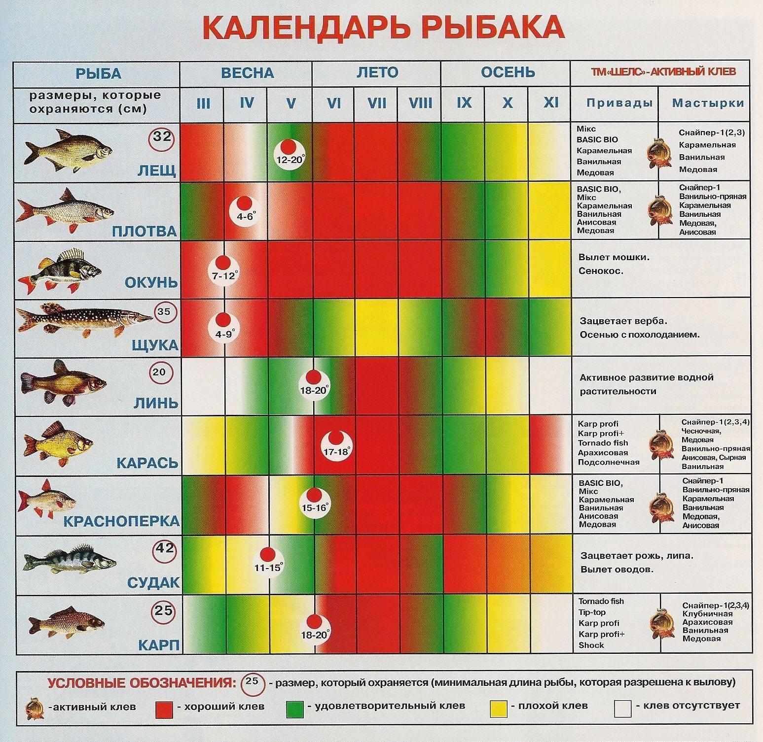 Когда клюет рыба - при каком давлении, ветре и температуре происходит лучший клев